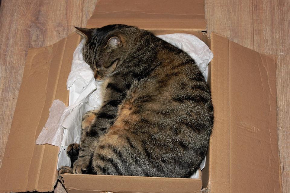 Cat, Cardboard, Domestic Cat, Box, Relax, Rest