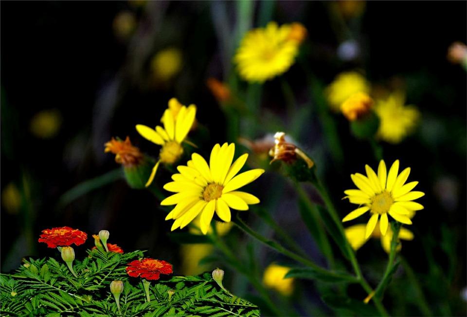 Flowers, Fall Color, Cards, Season, Orange, Garden