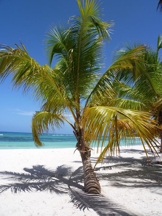 Sand, Caribbean, Coconut, Tropical, Sandy Beach, Ile