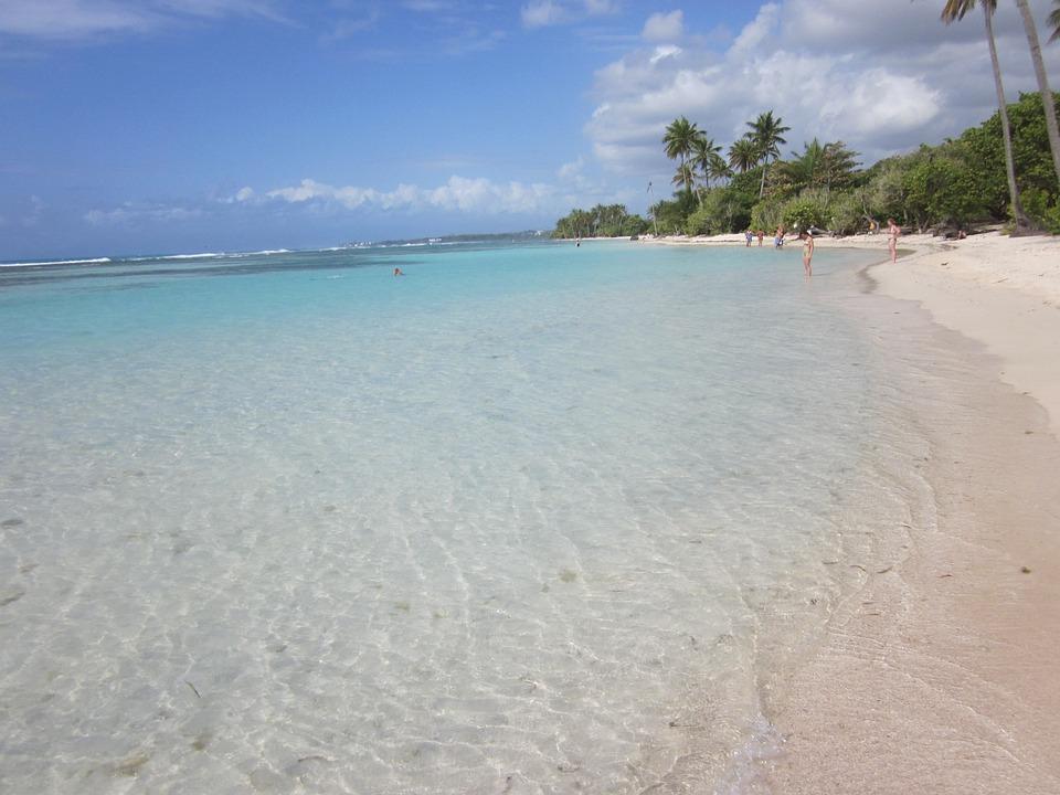 Beach, Island, Palm Trees, Guadeloupe, Caribbean