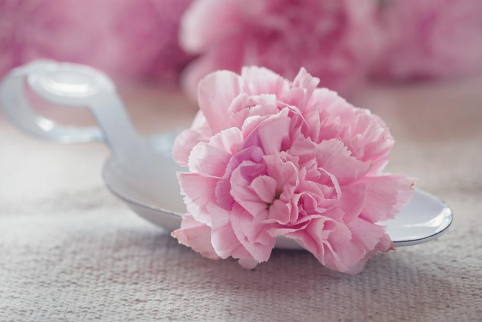 Carnation, Flower, Blossom, Bloom, Pink, Petals