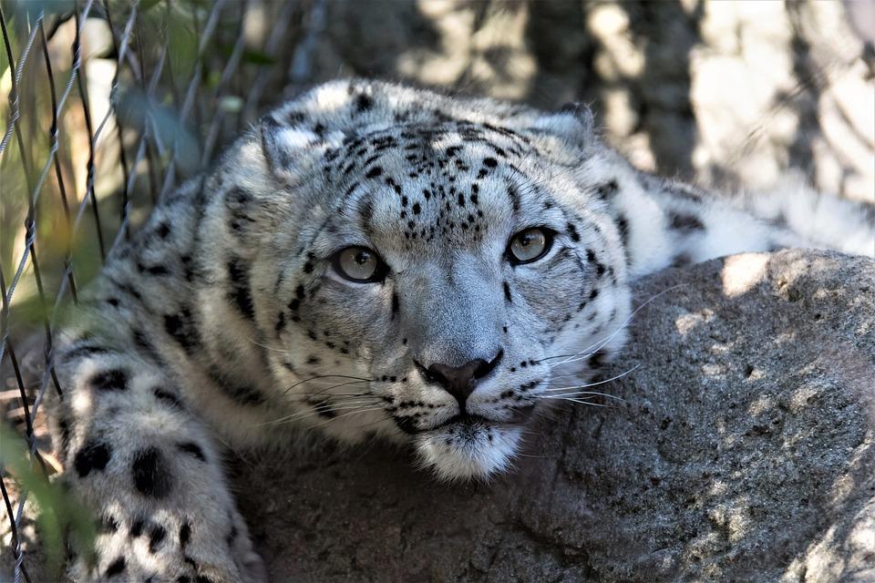 Wildlife, Leopard, Nature, Animal, Mammal, Carnivore
