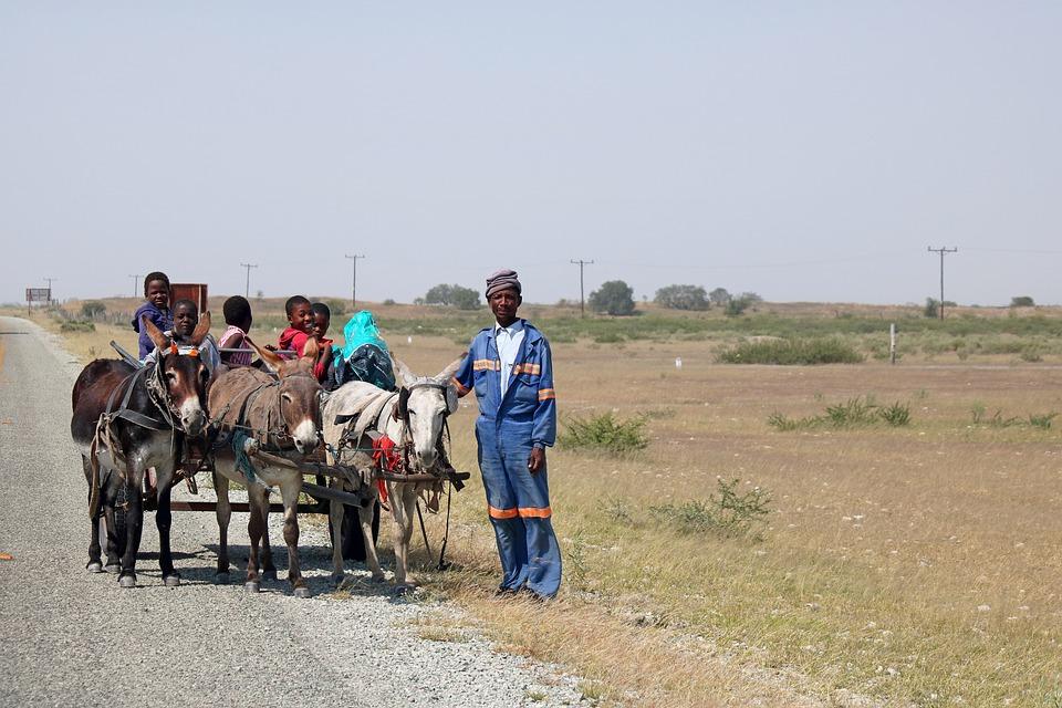 Donkey Cart, Cart, Donkey, Car, Harness, Vehicle