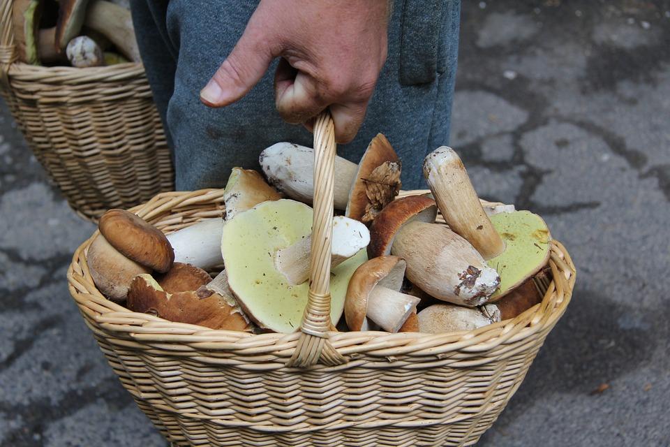 Sponge, Boletus, Cart, Wild Mushrooms, Mushrooms