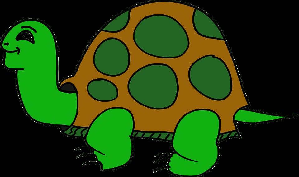 Animal, Cartoon, Elements, Turtle