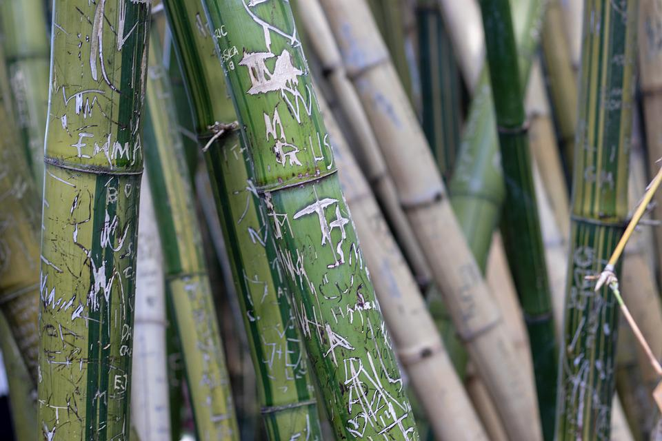 Bamboo, Graffiti, Green, Carving