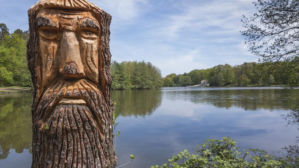 Tree, Carved, Wood, Carving, Strains, Face, Fig
