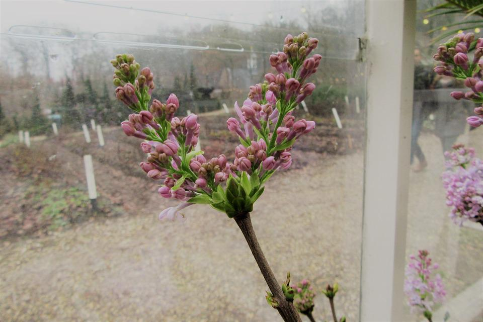 Pink Flower, Winter, Window, Cash, Flowering, Vegetable