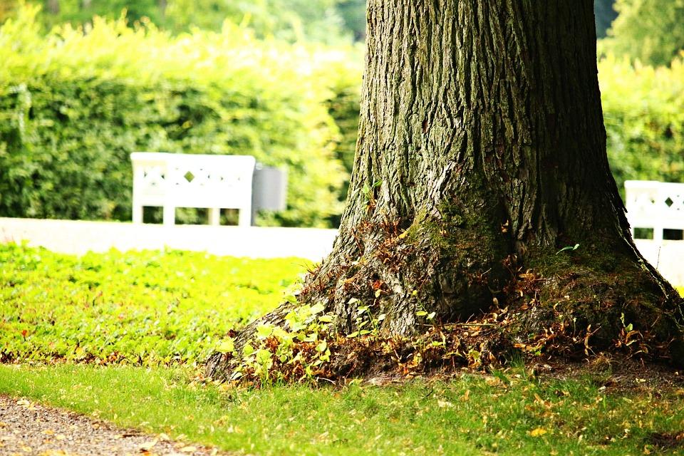 Tree, Park, Bank, Castle Park, Park Bench