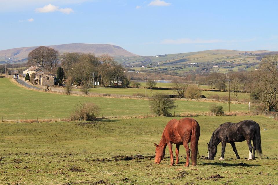 Horses, Pendle Hill, Lancashire, Colne, Castle Road