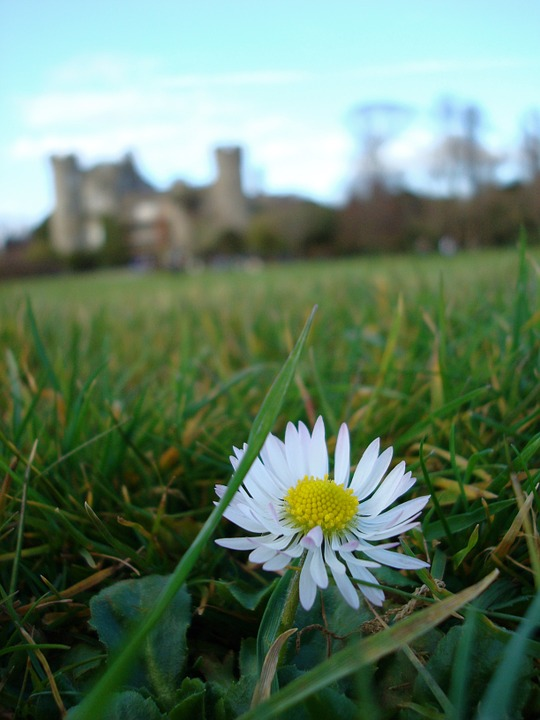 Flower, Ireland, Castle, Grass, Grounds, Sky, Green