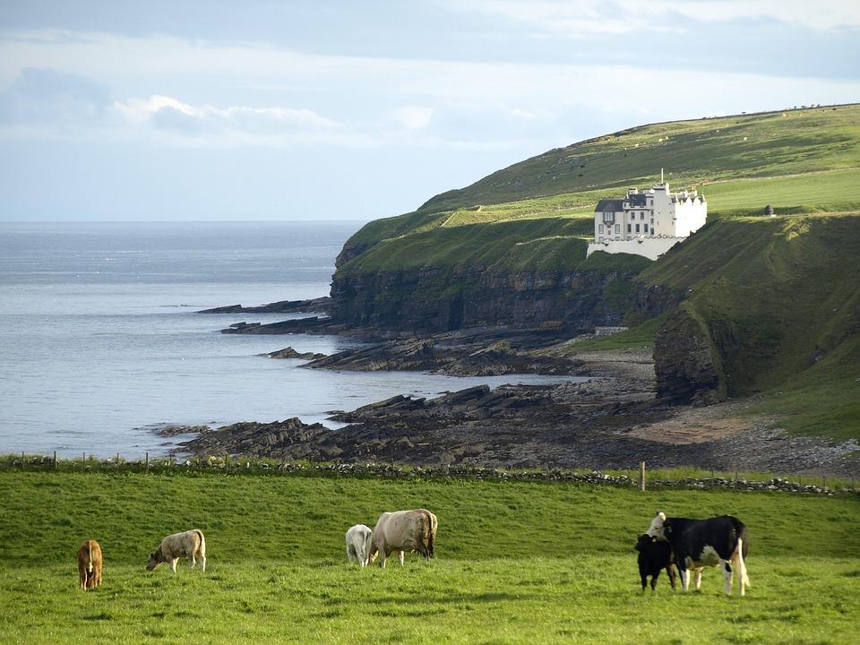 Scotland, Coast, Castle, Cows, Sea, Rock, Water, Nature