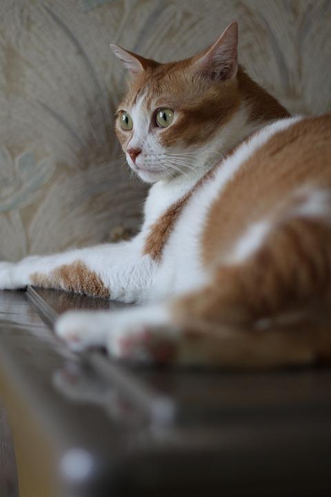 A Person, Figure, Cat