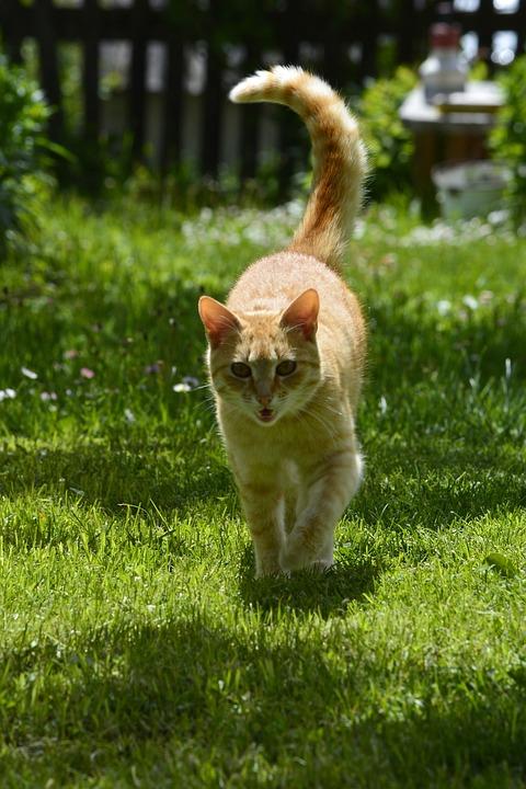Cat, Pet, Animal, Kitten, Feline, Kitty, Adorable