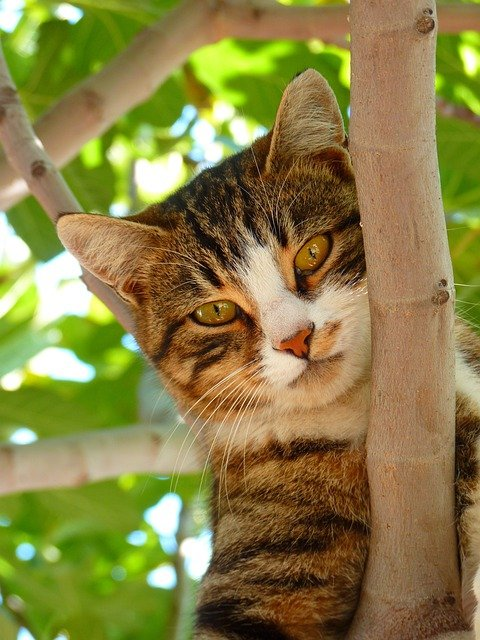 Cat, Sweet, Climb, Tree, Animal, Dear, Playful