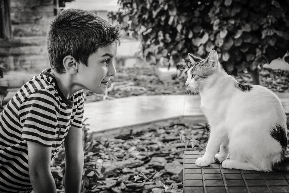 Boy, Cat, Animal, Communication, Emotion, Expression