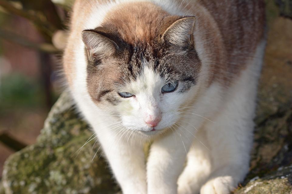Feline, Cat, Cat Eyes, Animals, Animal, Portrait