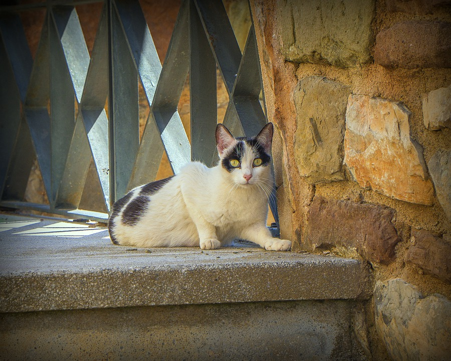 Cat, Animal, Pets, Portrait, Feline, Eyes, Mammal