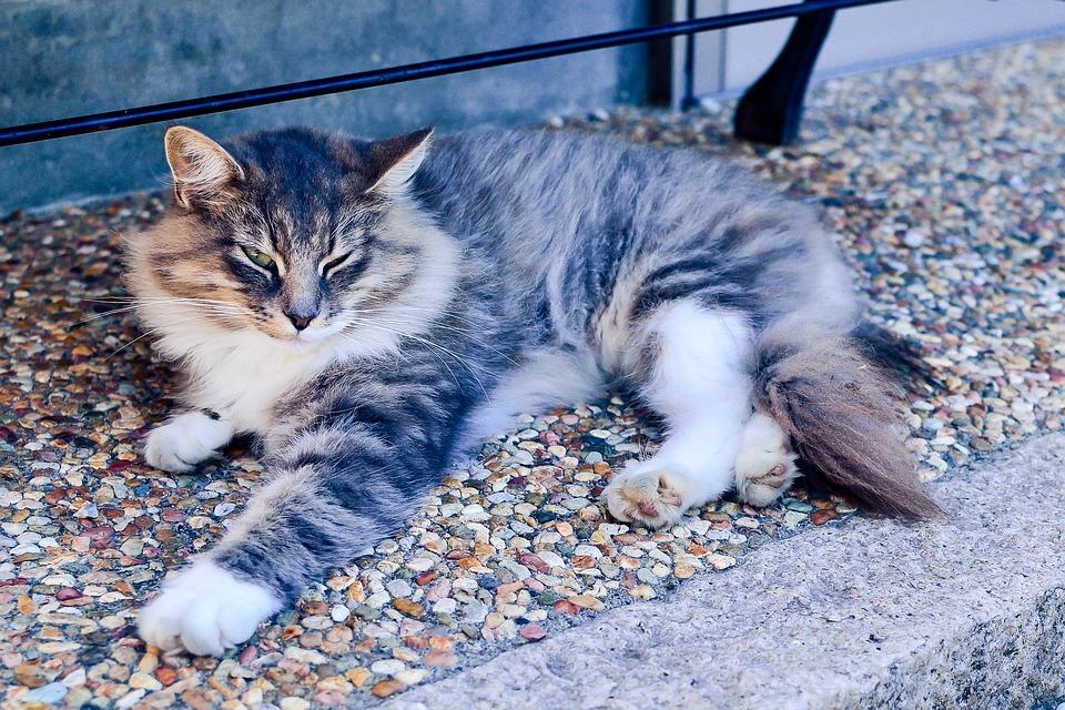 Japan, Animal, Cat, Creature, Female Cat, Cute