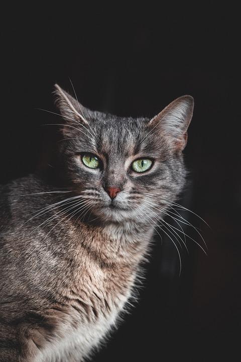 Cat, Green Eyes, Pet, Animal, Eye, Kitten, Portrait