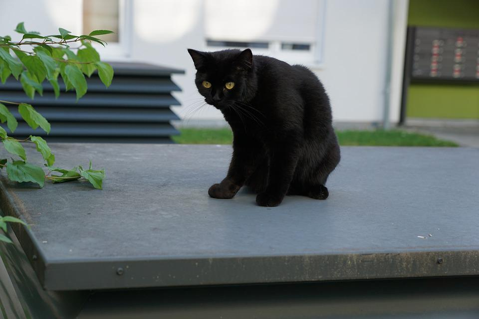 Cat, Black, Animal, Luck, Recover, Concerns, Grey