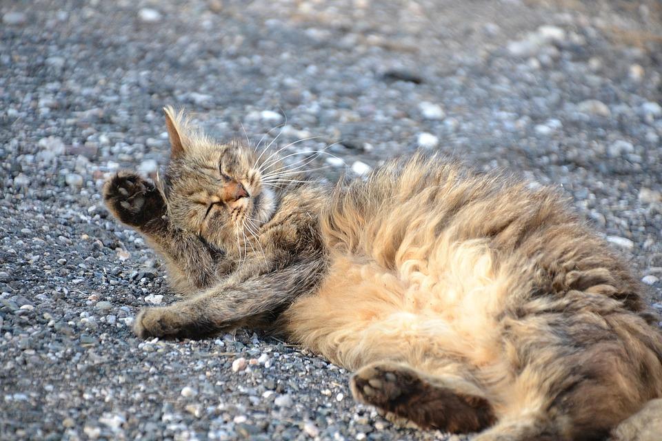 Cat, Mackerel, Cat Wash, Sweet, Animal