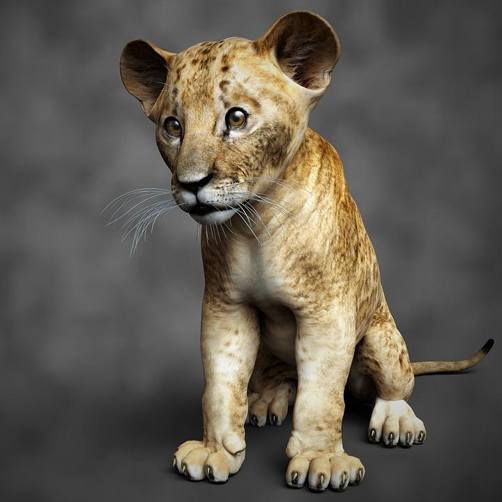 Lion, Animal, Nature, Fur, Young, Wild, Cat