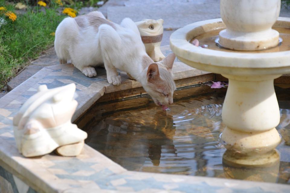 Cat, Animal, Animals, Eyes, Fur, Fountain, Cat Drinking