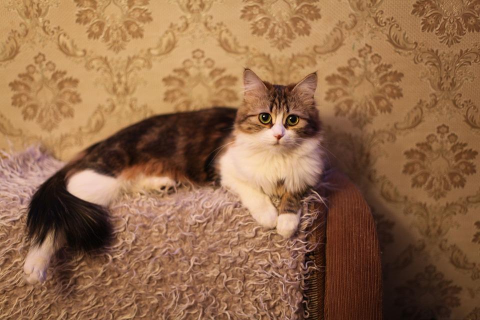 Cat, Animals, Cats, Pet, Handsome Man, Fluffy Cat