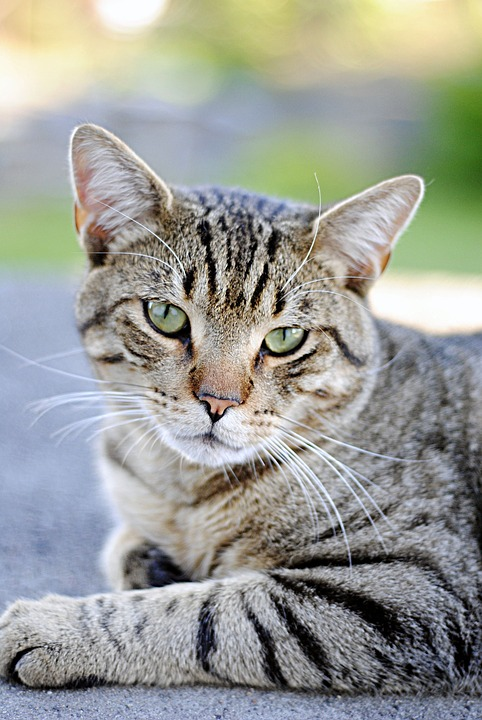 Cat, Animals, Outdoors