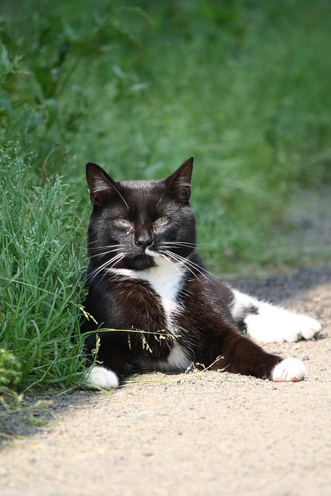Cat, Outside, Animals