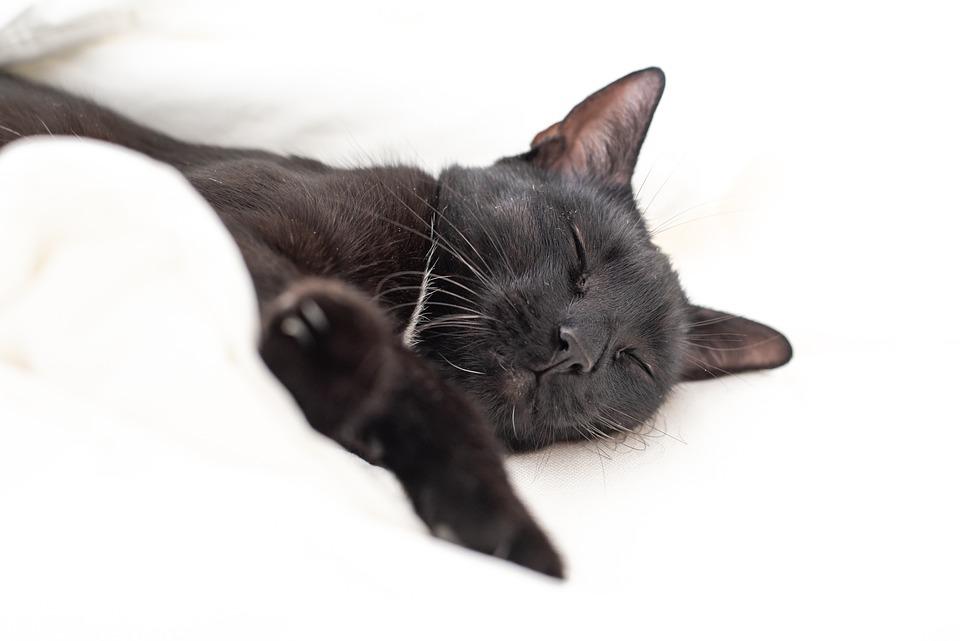 Kitten, Cat, Black Cat, Sleep, Bed, White, Nature