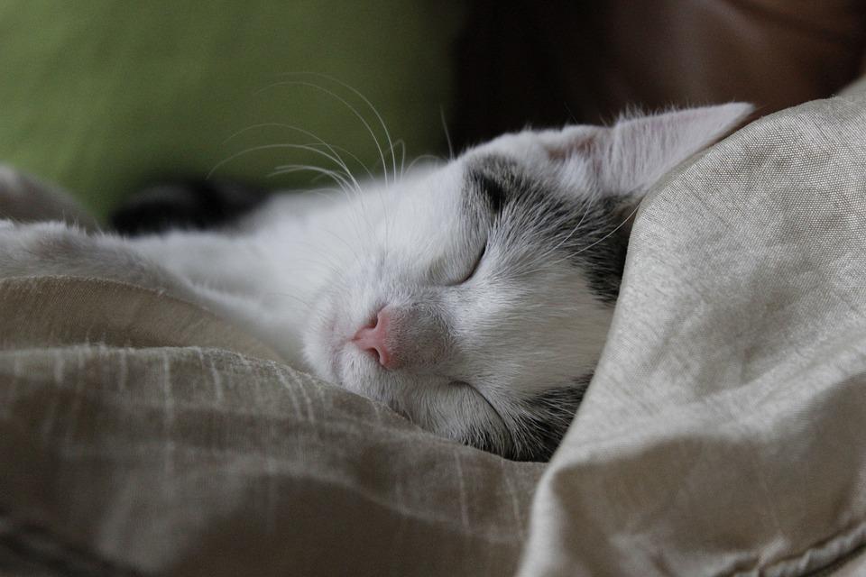 Cat, Sleep, Happy, Blessed, Peace