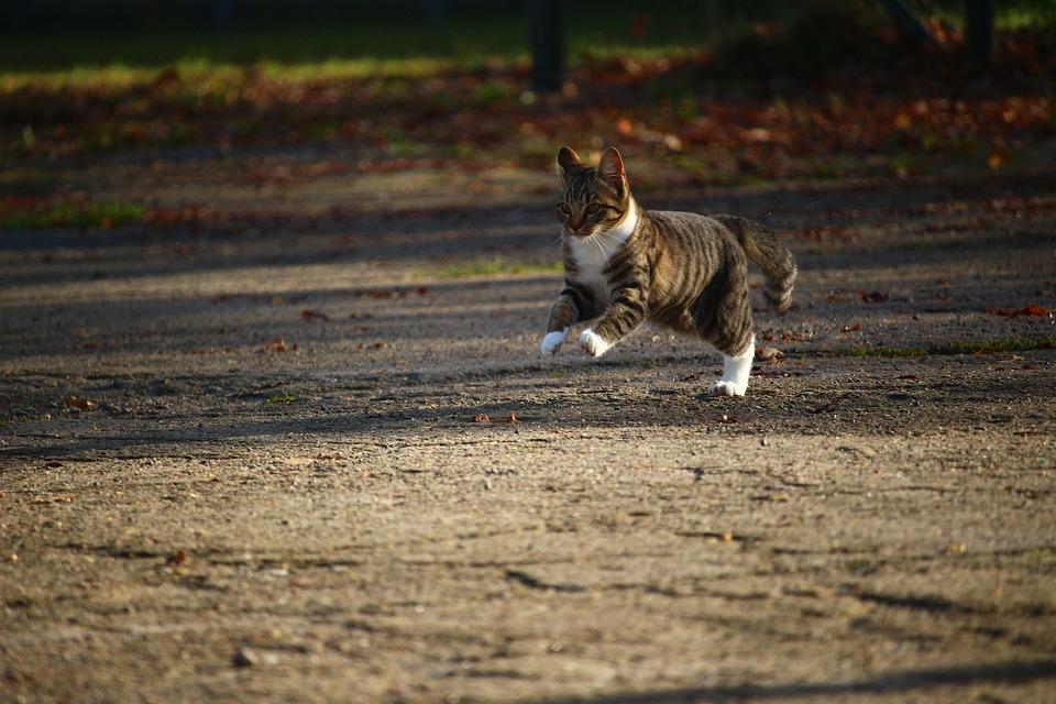 Cat, Kitten, Autumn, Young Cat, Cat Baby, Pet