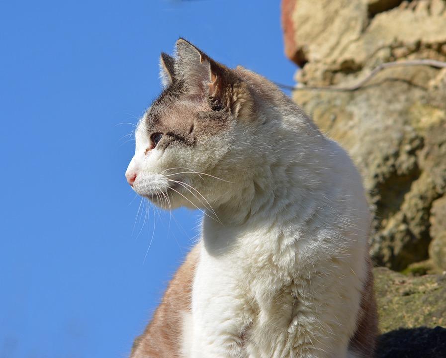 Feline, Cat, Animal, Cat Eyes, Animals, Portrait