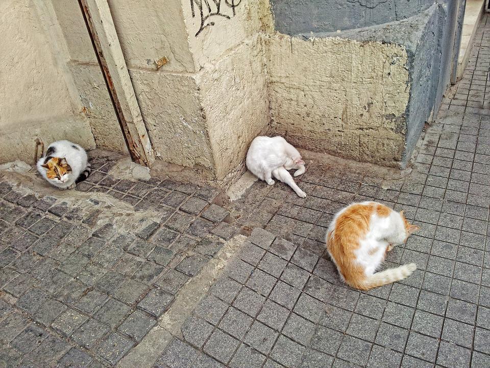 Cat, Animals, Animal, Cat Wash, Istanbul