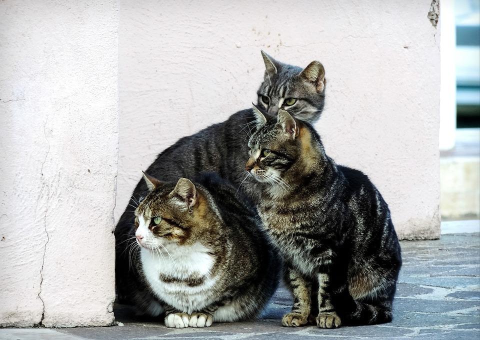 Cat, Cats, Feline, Felines, Colony Of Cats, Three