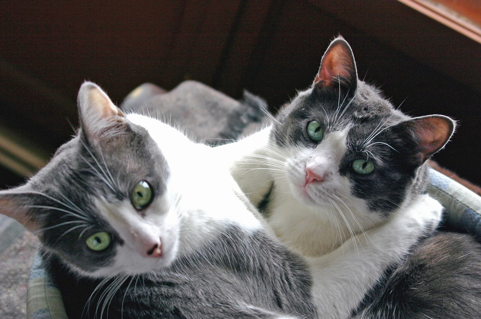 Cat, Hug, Complicity