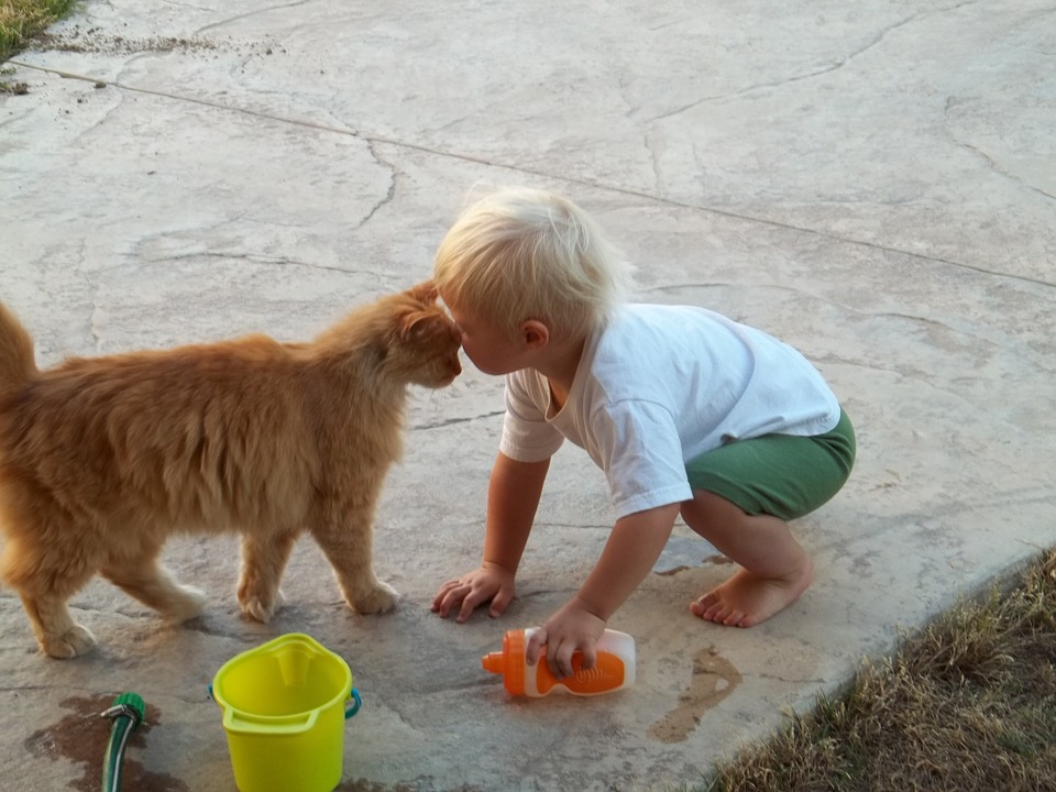 Kid, Boy, Happy, Playing, Cute, Cat, Pet