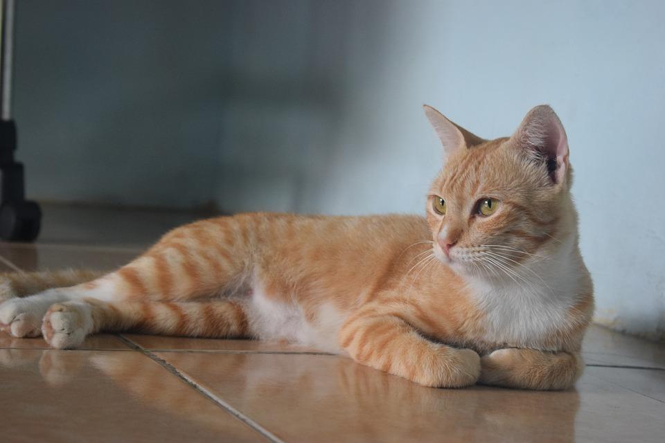 Cat, Pets, Animal, Portrait, Friendship, Cute, Domestic