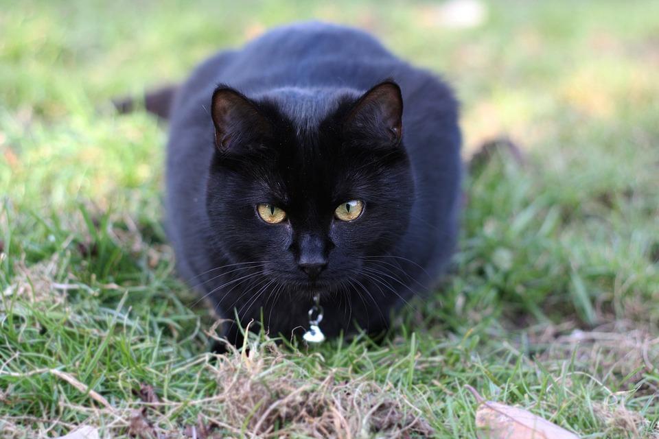 Cat, Black Cat, Black, Animal, Pet, Dark, Kitten