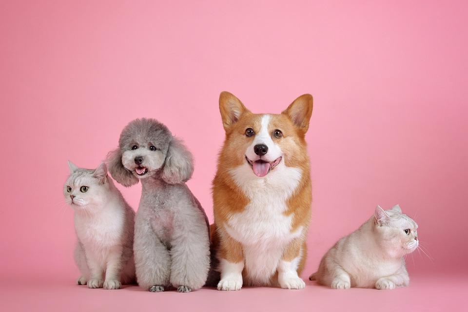 Pets, Cute, Cat, Dog, Cute Wallpaper, Pink, Animals