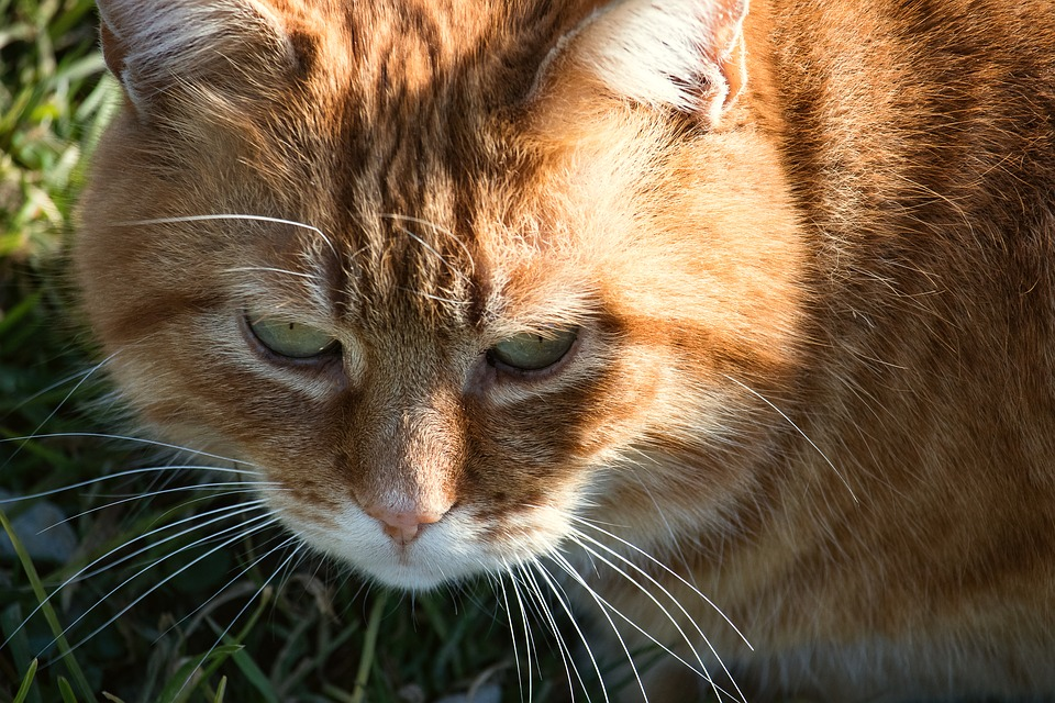Cat, Mammal, Animal, Animal World, Domestic Cat, Mieze