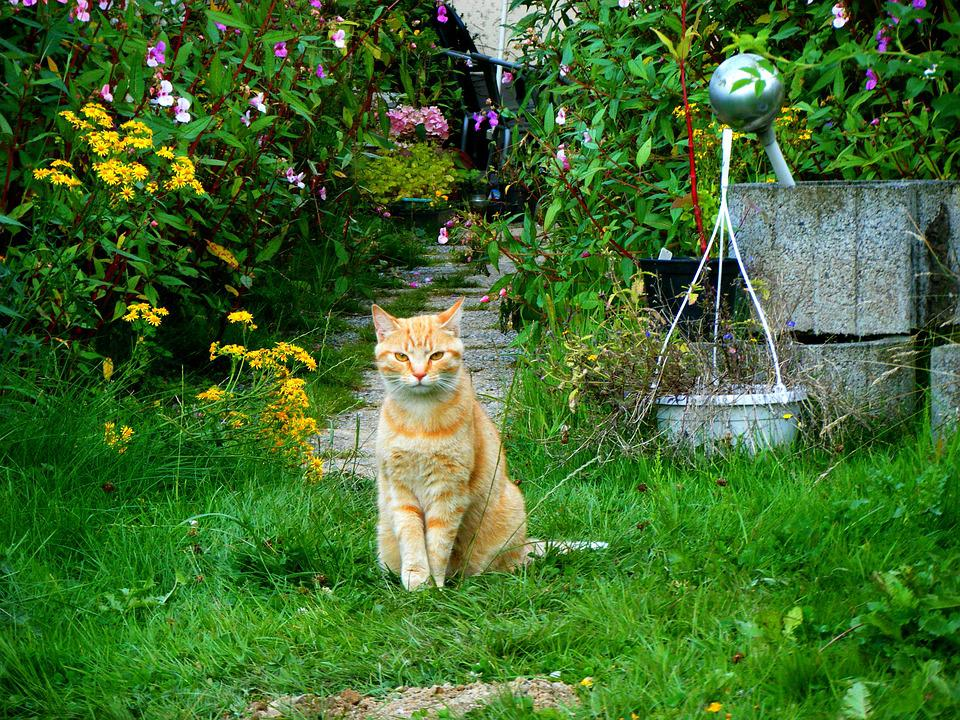 Cat, Garden, Red Cat, Domestic Cat, Pet, Young Cat
