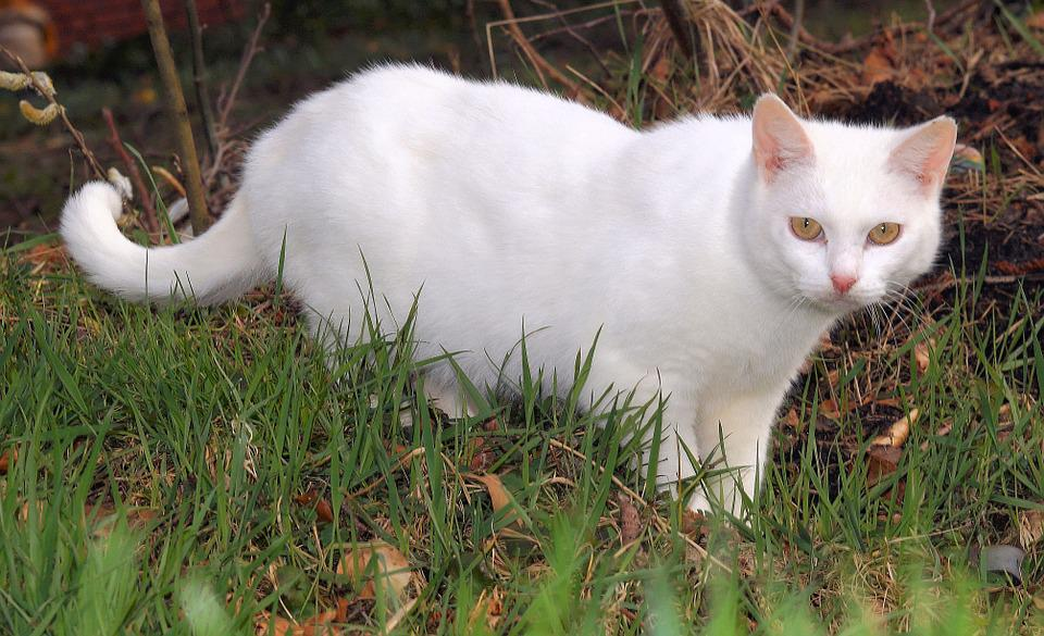 Cat, Hunting, Animal, Mieze, Domestic Cat, Start