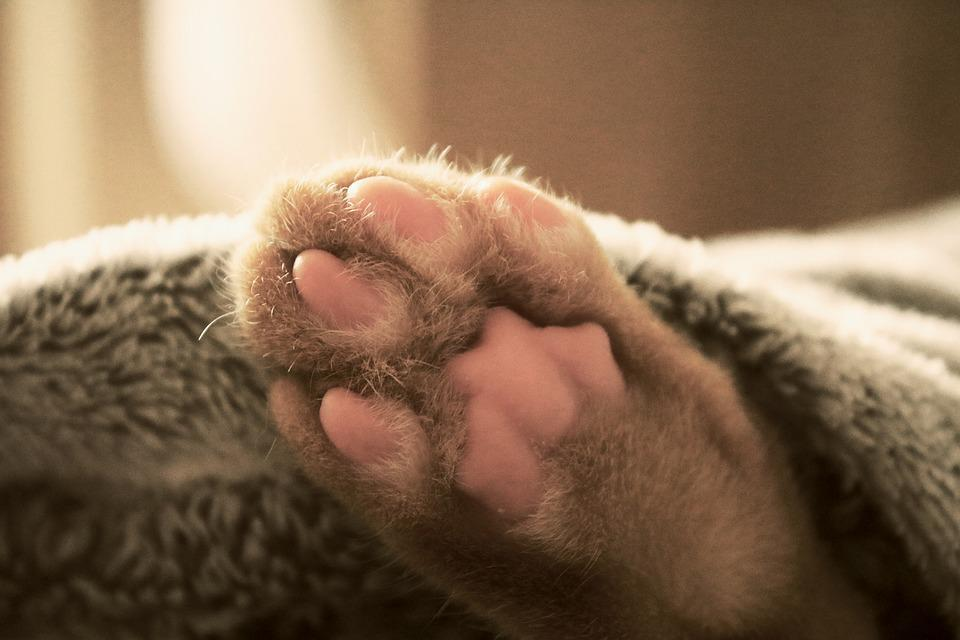 Cat, Paw, Bed, Sleeping, Pet, Animal, Feline, Domestic