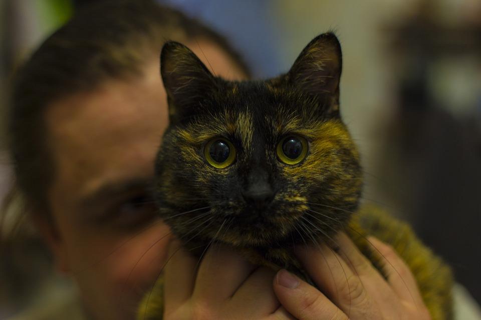 Cat, Snout, Bobtail, Animal, Cat's Eye, Cat Eyes