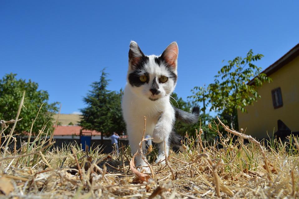 Cat Face, Cute Cat, White Cat, Animals, Black And White