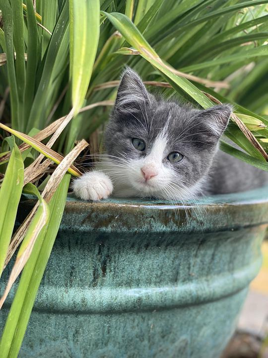 Cat, Feline, Animal, Adorable