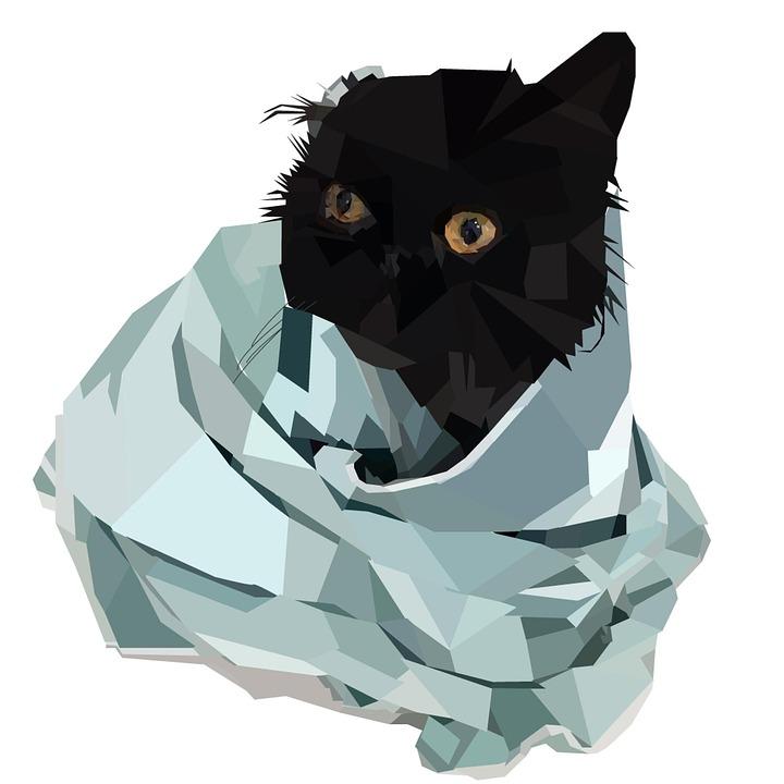 Cat, Feline, Pet, Mammal, Kitten, Portrait, Cute